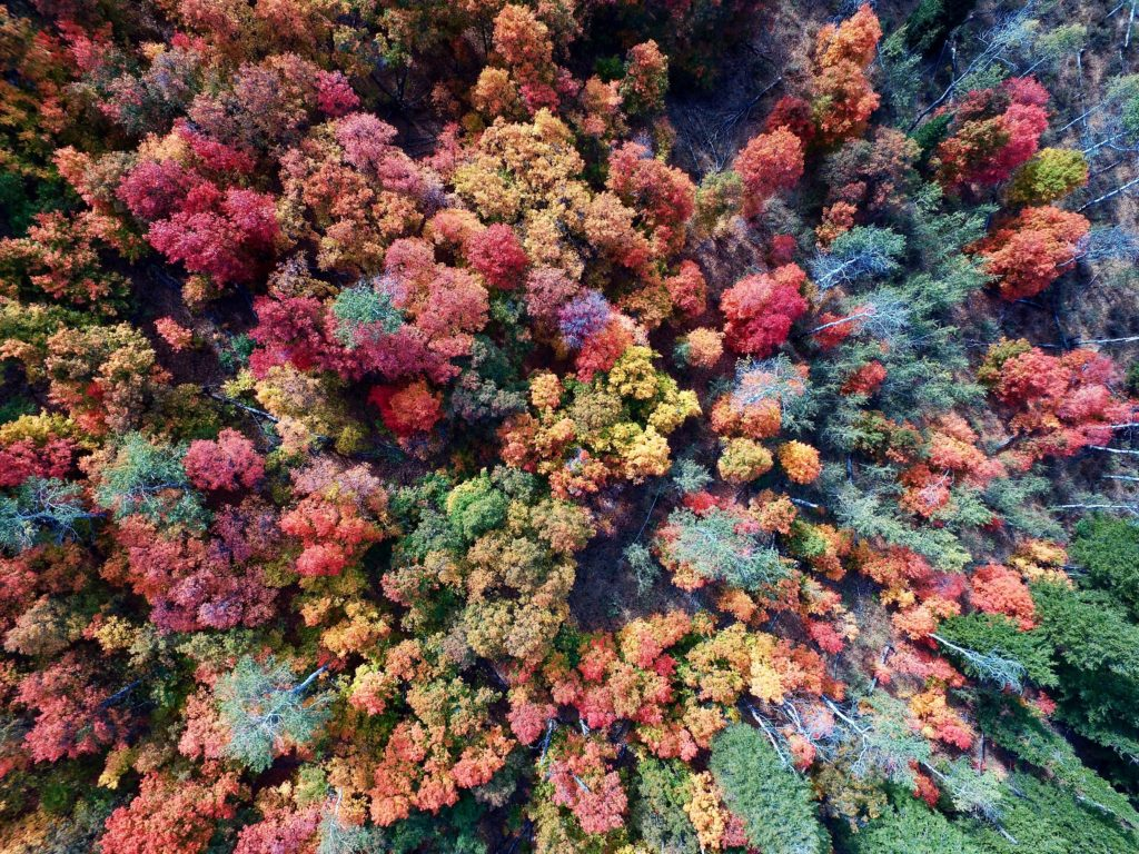 See fall colors from the air - Orlando Apopka Airport